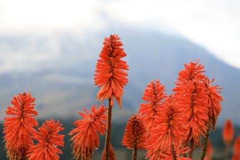 Flora y Popocatepetl cubierto